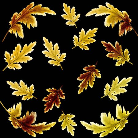 Floral botanical autumnal pattern with bright golden chrysanthemum leaves on black background. Fall seasonal backdrop for textile, napkins, scarf or scrapbook cover. Golden autumn