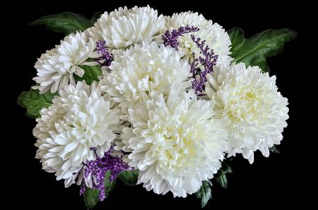 Vintage floral design - white chrysanthemum flowers bouquet with green leaves close up, on black background. Greeting card to any joyful or festive event, and may be tragic and sad as condolences