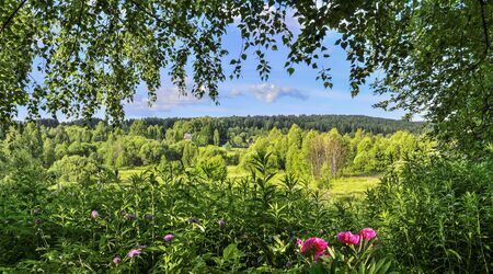 View through the trees foliage and flowers on a rustic sunny summer landscape with dense forest on hill at background. Sunlight and shadows - beauty and freshness of rural sumertime nature Zdjęcie Seryjne