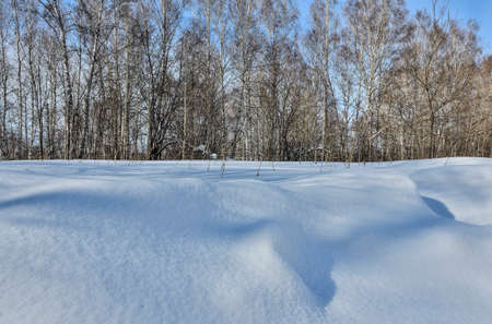 Wonderful winter landscape - snowy white birch forest. Shadows on white clear snow, snowdrifts at foreground, bright blue sky - beauty of nature or weather forecast concept. Winter walk