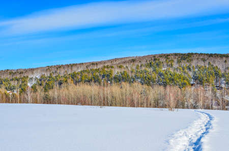 Wonderful winter landscape - narrow path in deep snow leading to birch and pine forest on hill. White clear snow, bright blue sky with white clouds - beauty of nature in wintertime 写真素材