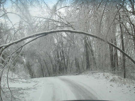 icey: Cold Icey road with tree bowed over Stock Photo