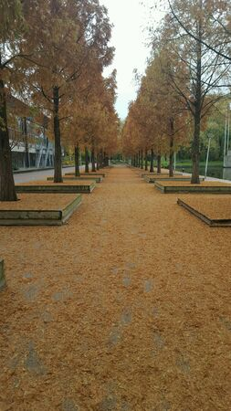 leafs: Walkway covered in fallen autumn leafs Stock Photo