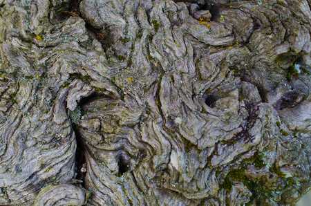 barks: Tree bark close up