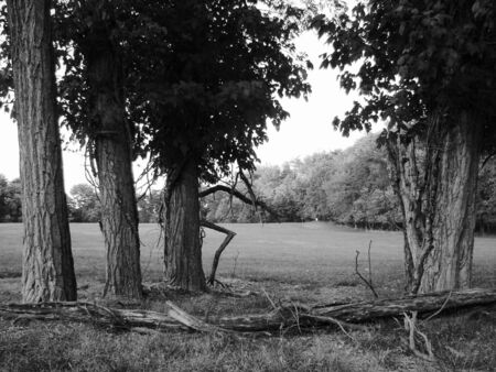 Four trees set against a meadow.
