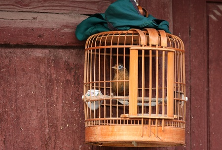 Bird locked in a wooden cage, a green cloth cover ready to wrap it, hanging over the pavement at a house door in a street of the old town Weishan, Yunnan, China  photo