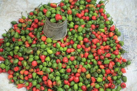 hinduist: Set of green and red peppers placed on a plastic piece stall on the ground, ready for sale, at the entrance to the Dakshin Kali hinduist temple, Pharping, Kathmandu, Nepal  Stock Photo