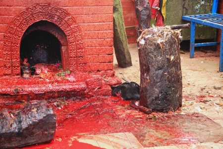 sacrificed: The bloody sacrifice area showing just sacrificed goat head and dove feathers  XVII century Manakamana Mandir-Heartwishes-Bhagwati Temple  Nepal