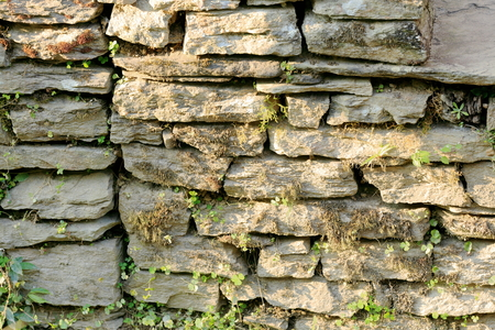 homesteads: Dry stone wall marking off some groves between the homesteads of Dhampus village-Kaski district-Gandaki zone-Nepal