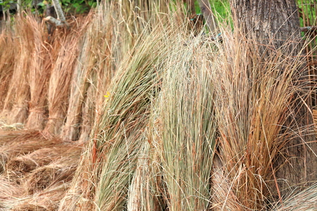 homestead: Bunches of rice straw leaning on the fence of the rear orchard of a traditional homestead in Patihani-Chitwan district-Nepal. Stock Photo