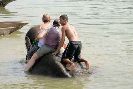 quadruped: CHITWAN, NEPAL - OCTOBER 14: Indian elephant -elephas maximus indicus- takes a bath with tourists and mahout after a work day on safari through the grasslands that border the Rapti river in the bufferzone off the Chitwan Nnal.Park in the Terai area on Oct
