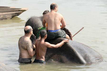 grazer: CHITWAN, NEPAL - OCTOBER 14: Indian elephant -elephas maximus indicus- takes a bath with tourists and mahout after a work day on safari through the grasslands that border the Rapti river in the bufferzone off the Chitwan Nnal.Park in the Terai area on Oct