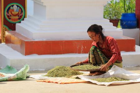 agachado: Namo Buda, Nepal - Octubre 16,2012: mujer procesa soja y hierbas en el patio trasero de la parte superior de la AD-1978 VVKhenchen Thrangu Rinpoche fundó Thrangu Tashi Yangtse monasterio budista, el 16 de octubre de 2012. Namo Buda Kavrepalanchok