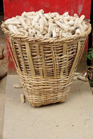 zea mays: Wicker basket replete with fully eaten corncobs