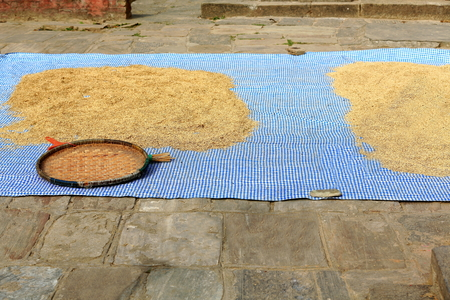 Paddy rice sundrying laid on a plastic raffia mat-wicker tray aside on the floor of a small square in the Tribheni Ghat-Khware shrine area at the Punyamati and Roshi khola-rivers junction. Panauti-Kavrepalanchok dstr.-Bagmati zone-Nepal.