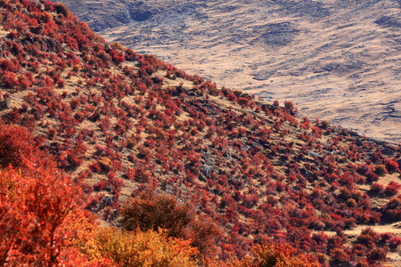 orison: Reddish shrubs covering the mountain slope in which stands the Drak Yerpa monasterycomplex of more than 80 meditation caves at 4885 ms.alt. LhasaTibet A.R.China.