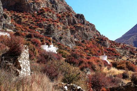 orison: White stupas among reddish shrubs covering the mountain slope in which stands the Drak Yerpa monasterycomplex of more than 80 meditation caves at 4885 ms.alt. LhasaTibet A.R.China.