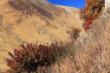 falltime: Dried reddish shrubs in the autumn and pastures on the mountain slope opposite the Drak Yerpa monasterycomplex of more then 80 meditation caves at 4885 ms.alt. Lhasa pref.Tibet.