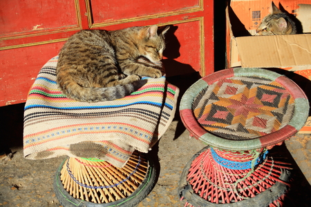 lacquerware: Cats at sunbath on typical rug over wicker stool and inside cardboard box before a red lacquered chest.  Stock Photo