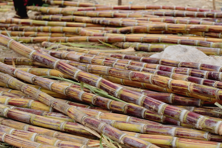 sunday market: Sugar canes set on a stall on the floor for sale in the sunday market where the Oromo-Amhara-Afar peoples meet. Senbete-Oromia Zone-Amhara region-Ethiopia.