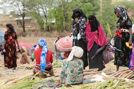 sunday market: SENBETE, ETHIOPIA-MARCH 24: Local women sell sugarcane in a stall of the sunday market where the oromo-amhara-afar peoples meet on March 24, 2013. Senbete-Oromia zone-Amhara region-Ethiopia. Editorial