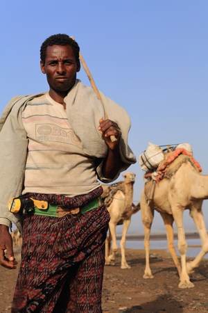 herder: DANAKIL, ETHIOPIA-MARCH 28: Afar herder leads a caravan of dromedaries and donkeys from Hamed Ale hamlet to Lake Assale to load salt blocks and transport them to market-Berahile town on March 28, 2013 Editorial