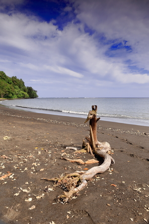 convolute: Twisted dry tree trunk swept by the tide and landed on the volcanic dark sand of the beach of Olal village at the Northern tip of Ambrym island. Malampa province-Vanuatu. Stock Photo