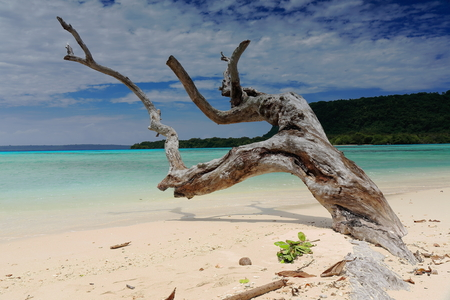 Big dry tree trunk pointing to the NNE half-buried on the white sands at the northern tip of the beach with Dolphin island on the background. Port Olry-Espiritu Santo island-Sanma province-Vanuatu. Foto de archivo