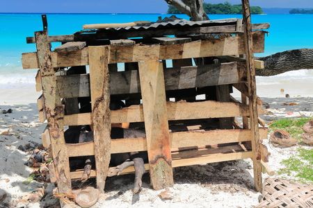 Black pigs locked in a wooden cage placed just beside the beach in the shadow of trees and facing Malmas island across the turquoise blue water of the bay. Port Olry-Espiritu Santo island-Vanuatu.