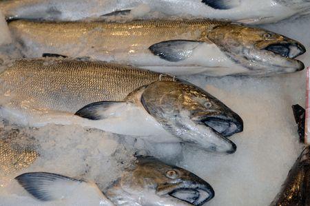 Fresh Salmon at the market photo