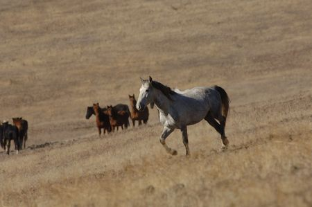 untitled key: Wild horse standing alone