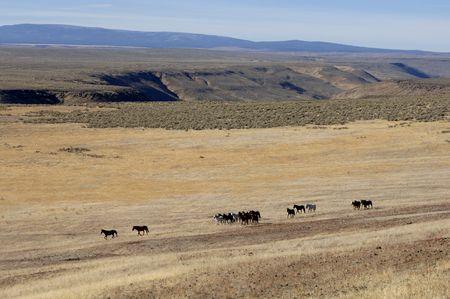 untitled key: Wild horses running across the praire Stock Photo