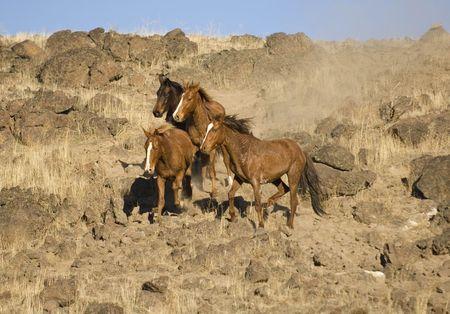 sagebrush: Wild horses stopped on a hillside Stock Photo