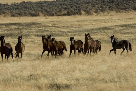 grey horses: Wild horses standing in the tall grass Stock Photo