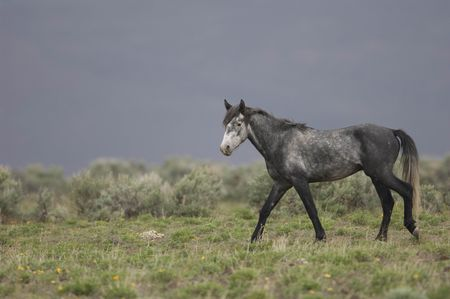 Grey horse standing alone Stock Photo - 941539