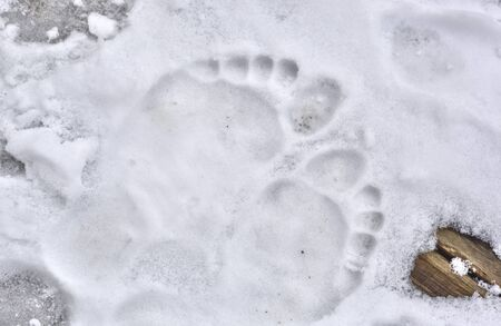 Footprints barefoot in cold snow  Stock Photo