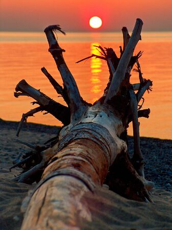 Driftwood roots with sunset in distance Imagens