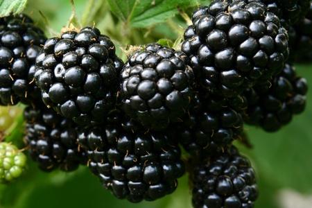 blackberry: blackberry