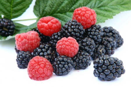 blackberry and berry photo