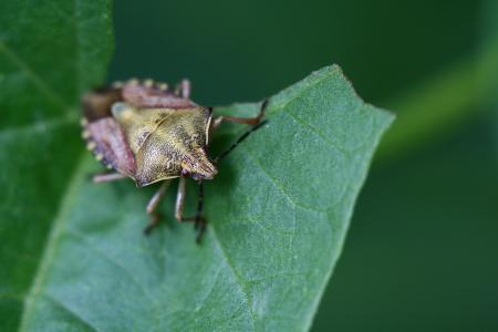 Winged insects Zdjęcie Seryjne