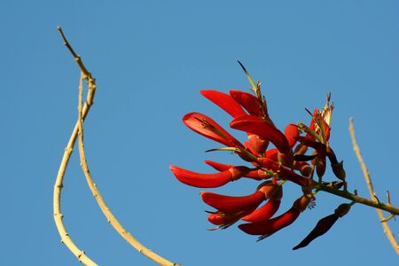 red flowers Zdjęcie Seryjne