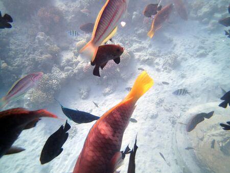 underwater world Zdjęcie Seryjne