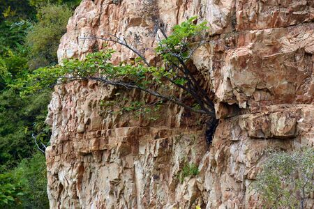 plant in the rock