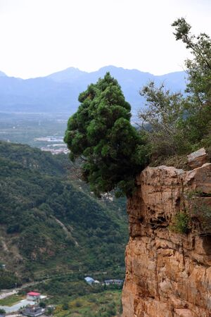 tree on top of a cliff