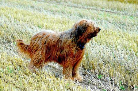 Wachsamer Hund Standard-Bild - 2538302