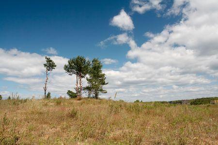 Woodland landschap