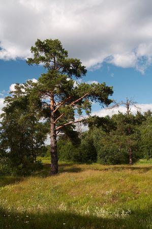 Woodland landscape