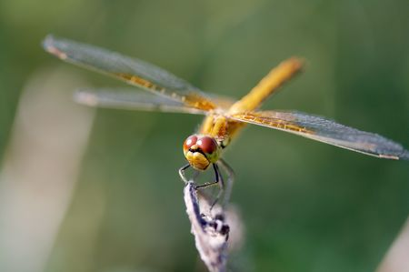 Dragonfly op mes