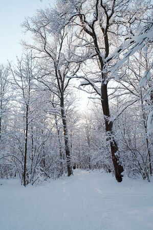 Trees in snow in winter, Russia