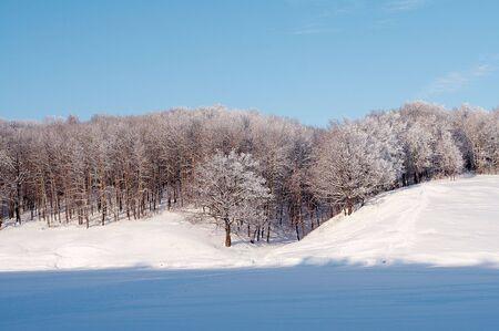 Bomen in de sneeuw in de winter, Rusland